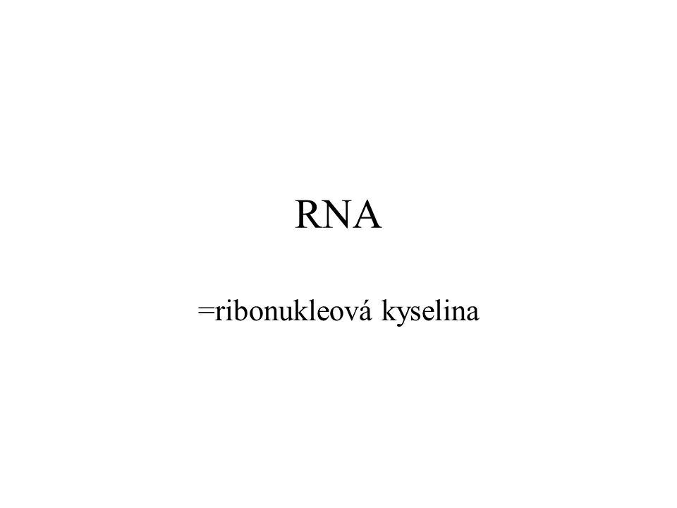 =ribonukleová kyselina