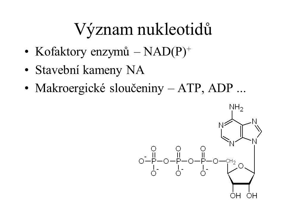 Význam nukleotidů Kofaktory enzymů – NAD(P)+ Stavební kameny NA