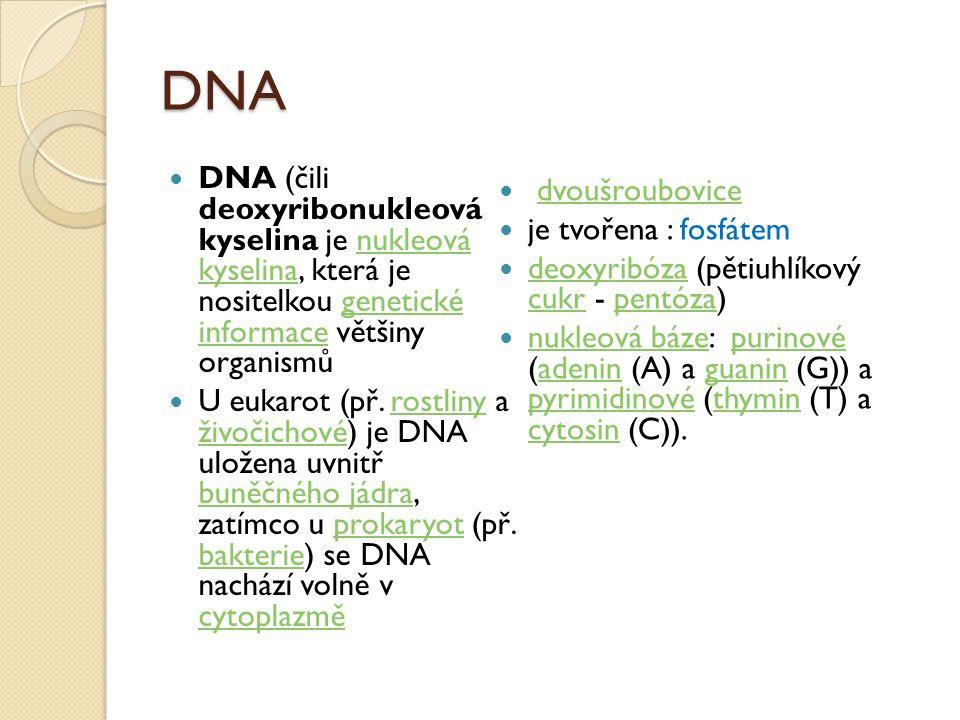 DNA DNA (čili deoxyribonukleová kyselina je nukleová kyselina, která je nositelkou genetické informace většiny organismů.