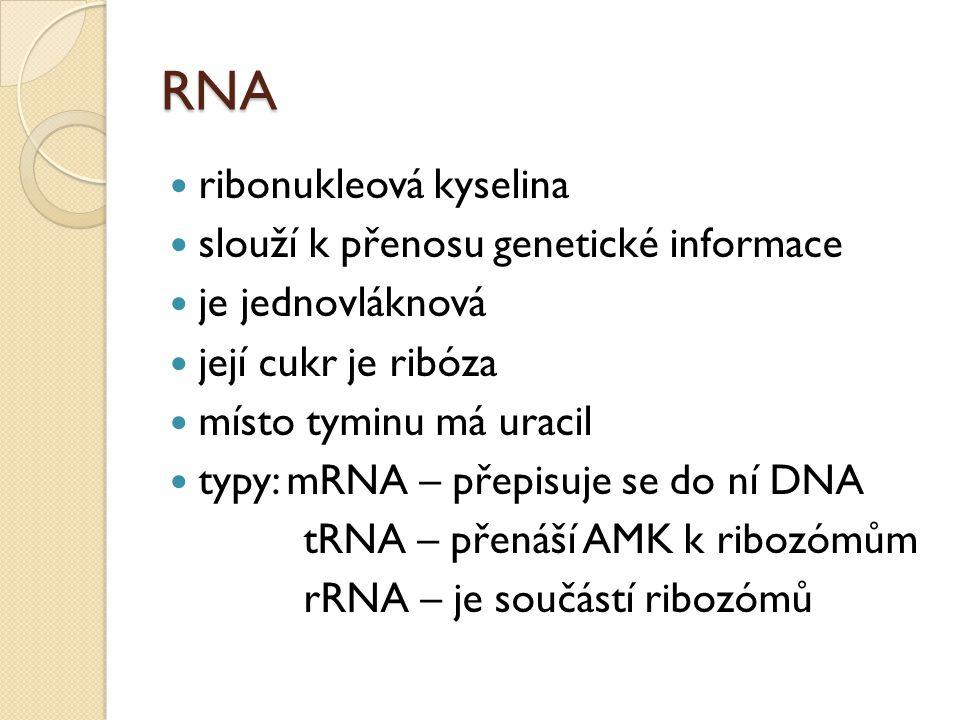 RNA ribonukleová kyselina slouží k přenosu genetické informace