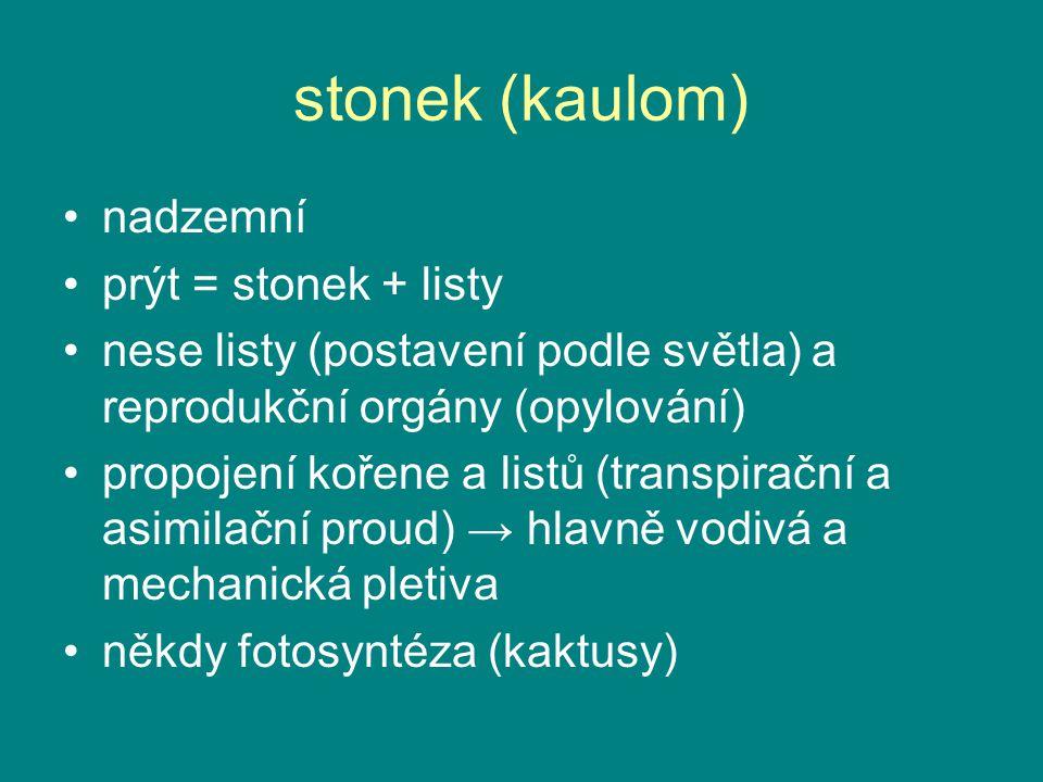 stonek (kaulom) nadzemní prýt = stonek + listy