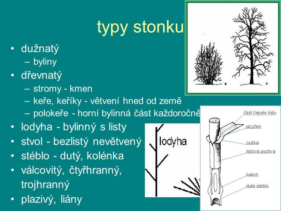 typy stonku dužnatý dřevnatý lodyha - bylinný s listy