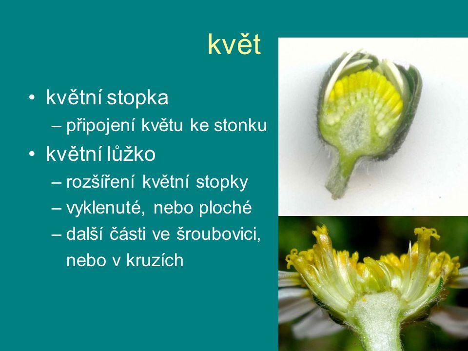 květ květní stopka květní lůžko připojení květu ke stonku