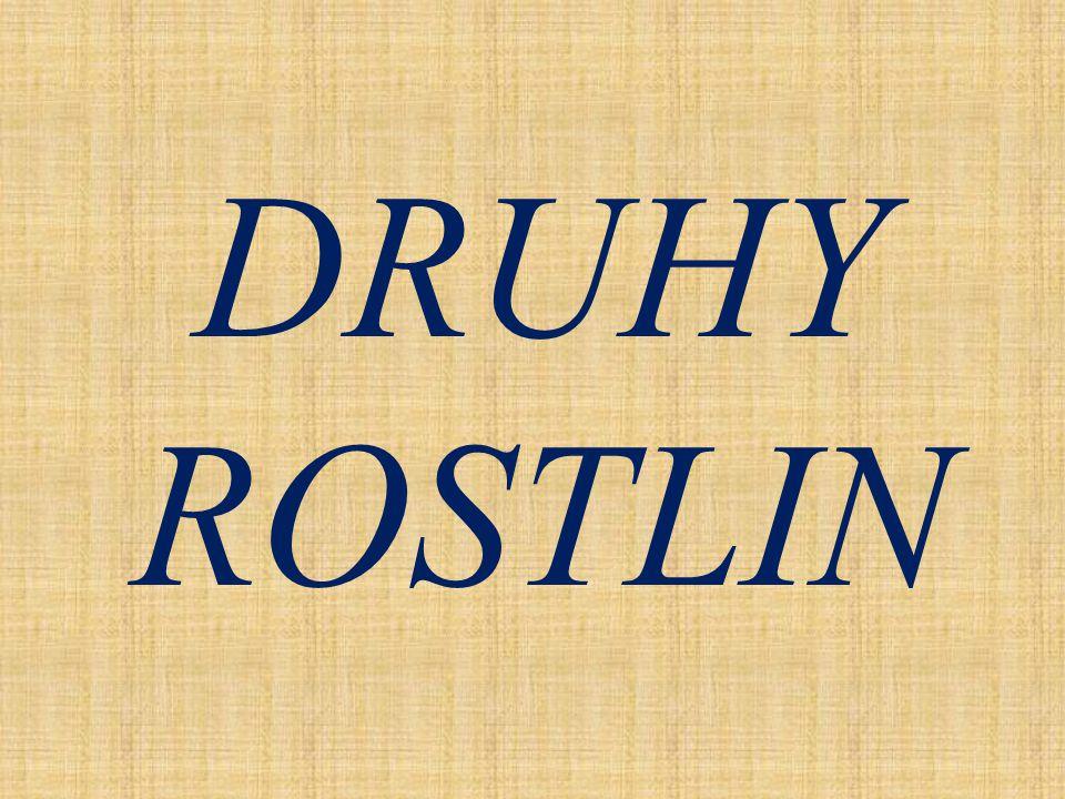 DRUHY ROSTLIN