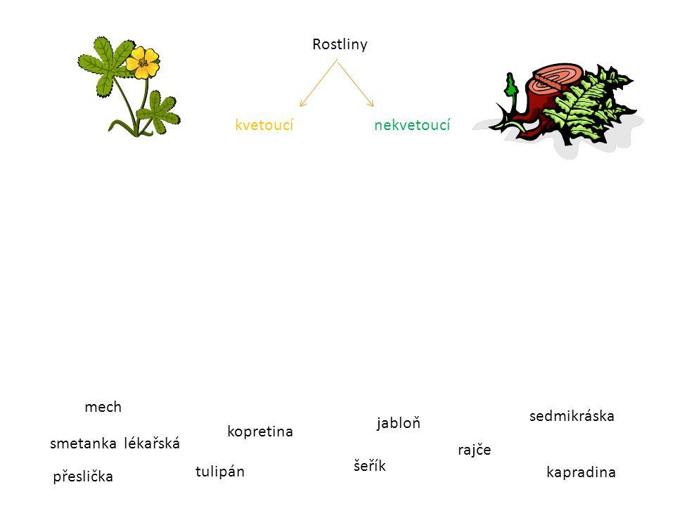 Rostliny kvetoucí nekvetoucí. mech. sedmikráska. jabloň. kopretina. smetanka lékařská.