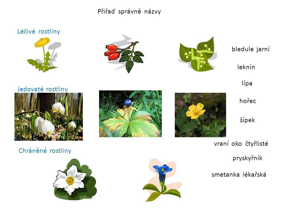 Přiřaď správně názvy Léčivé rostliny bledule jarní leknín lípa