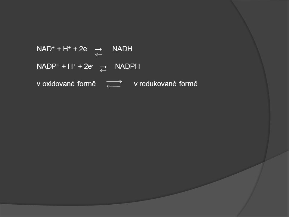 NAD+ + H+ + 2e- → NADH NADP+ + H+ + 2e- → NADPH.