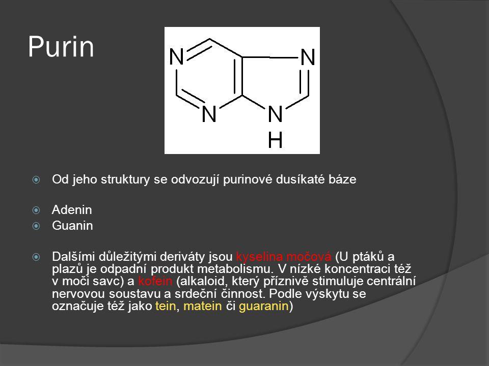 Purin Od jeho struktury se odvozují purinové dusíkaté báze Adenin