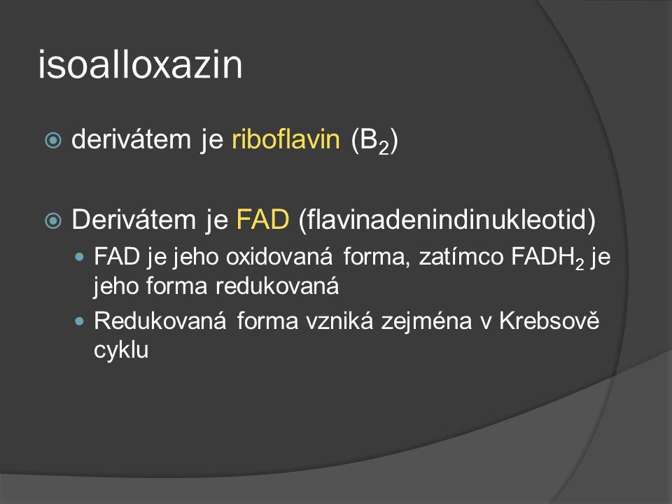 isoalloxazin derivátem je riboflavin (B2)