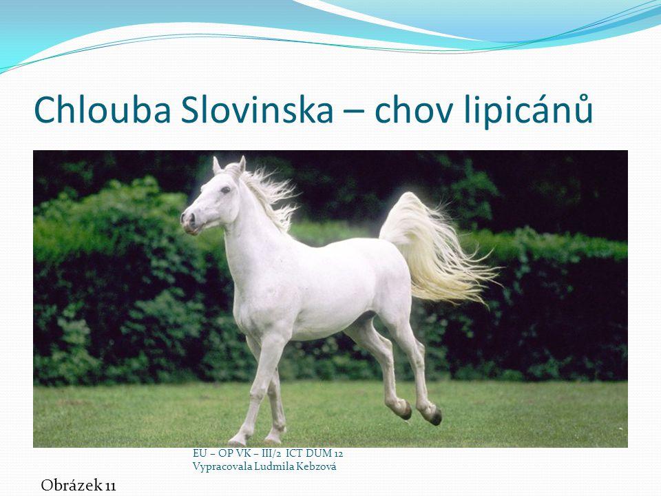 Chlouba Slovinska – chov lipicánů