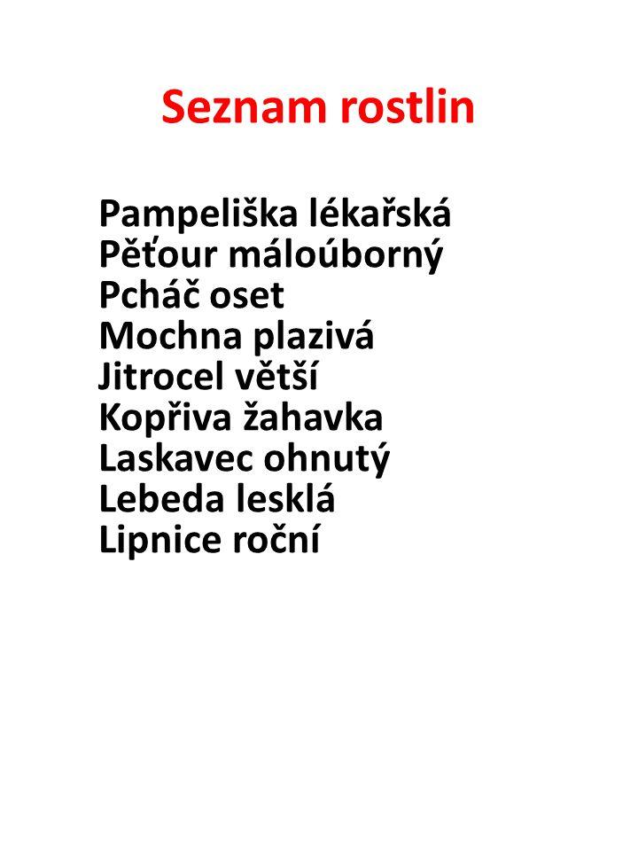 Seznam rostlin