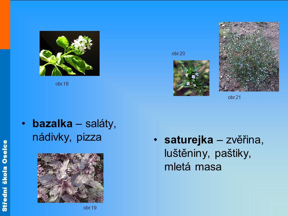 bazalka – saláty, nádivky, pizza