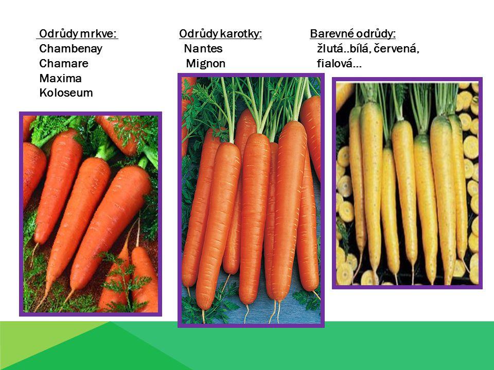 Odrůdy mrkve: Odrůdy karotky: Barevné odrůdy: