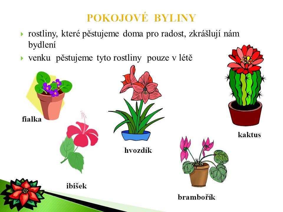 POKOJOVÉ BYLINY rostliny, které pěstujeme doma pro radost, zkrášlují nám bydlení. venku pěstujeme tyto rostliny pouze v létě.