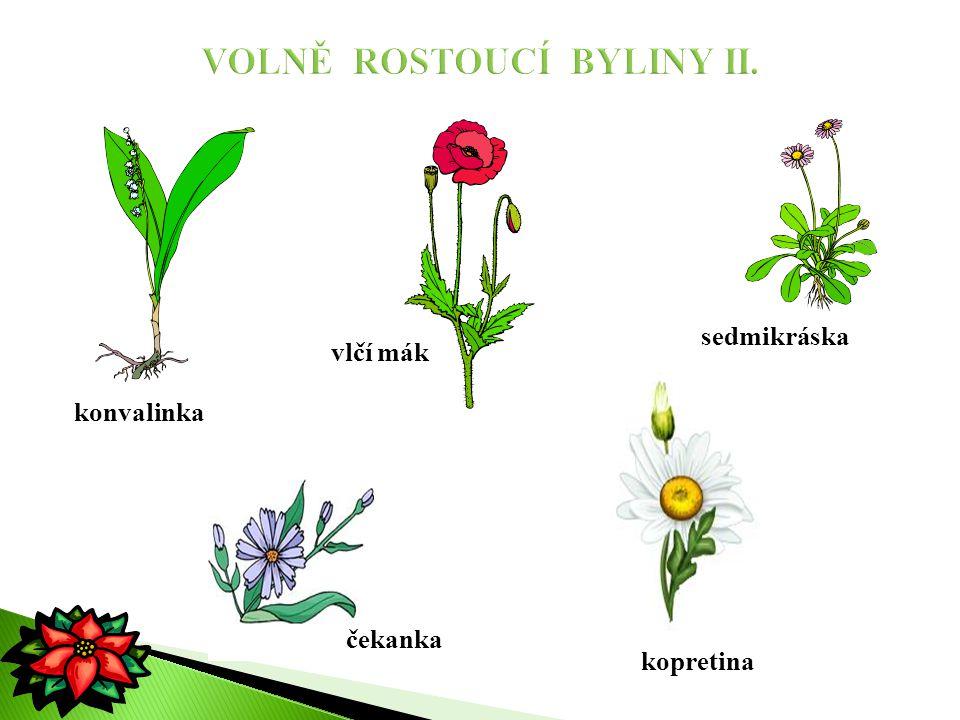 VOLNĚ ROSTOUCÍ BYLINY II.