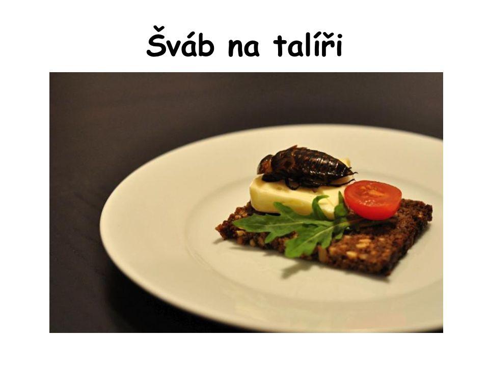 Šváb na talíři