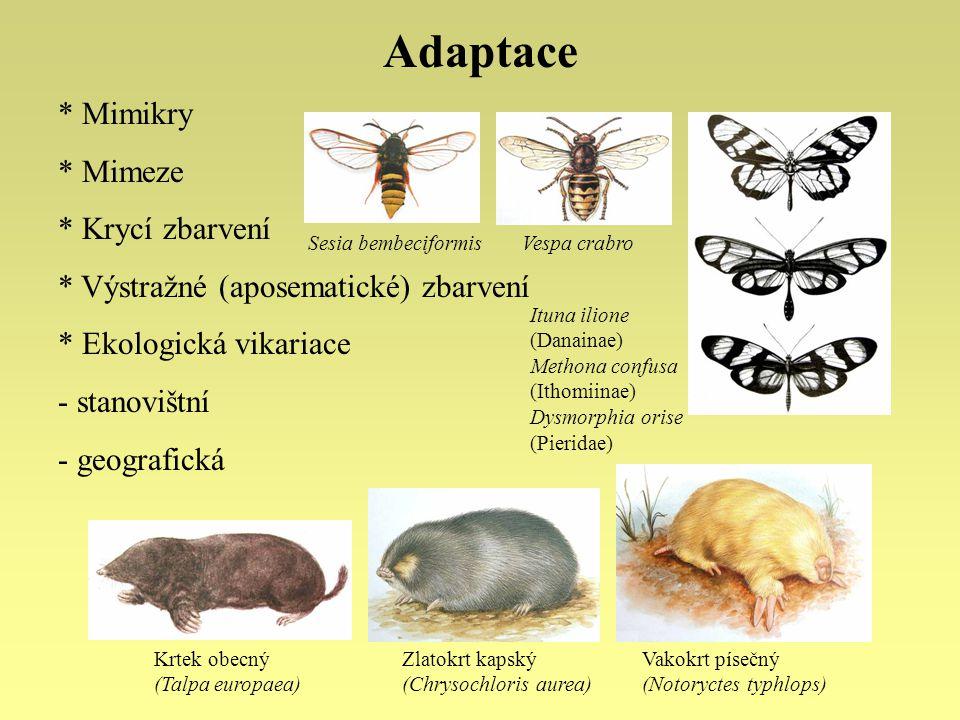 Adaptace Mimikry Mimeze Krycí zbarvení