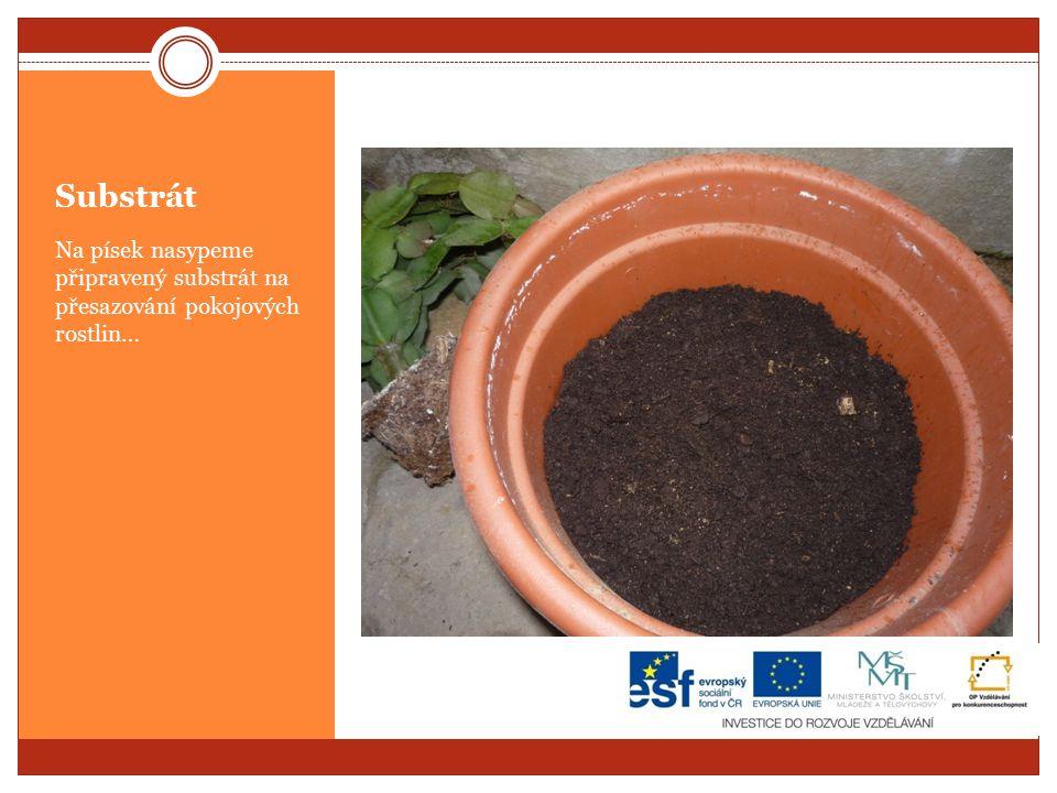 Substrát Na písek nasypeme připravený substrát na přesazování pokojových rostlin…