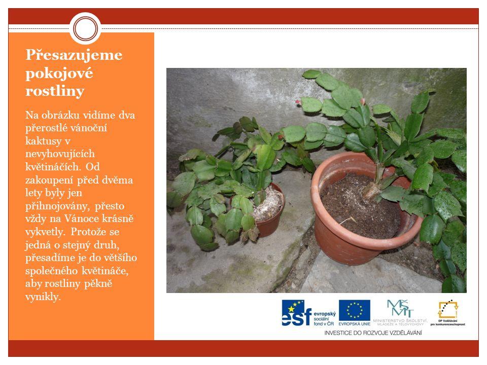 Přesazujeme pokojové rostliny