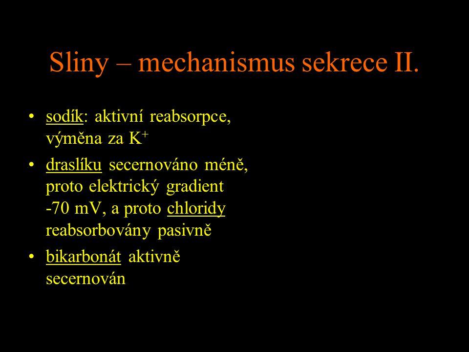 Sliny – mechanismus sekrece II.