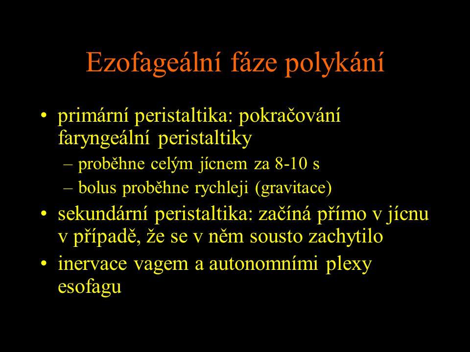 Ezofageální fáze polykání