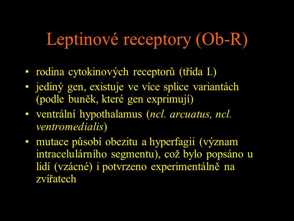 Leptinové receptory (Ob-R)