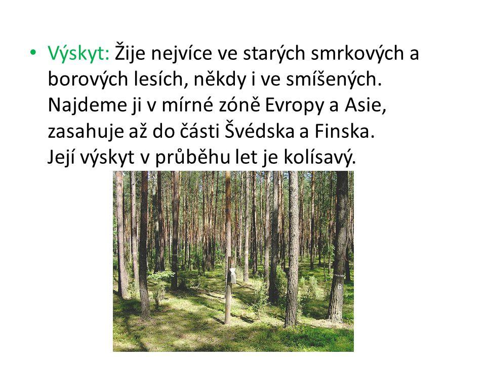 Výskyt: Žije nejvíce ve starých smrkových a borových lesích, někdy i ve smíšených.