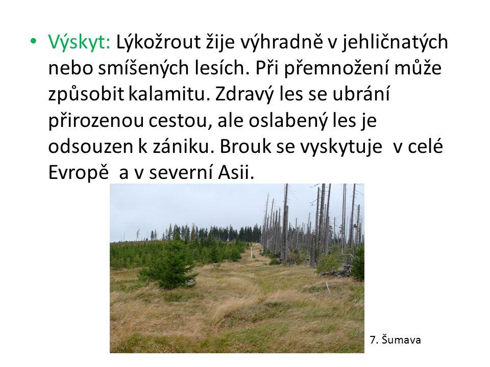 Výskyt: Lýkožrout žije výhradně v jehličnatých nebo smíšených lesích