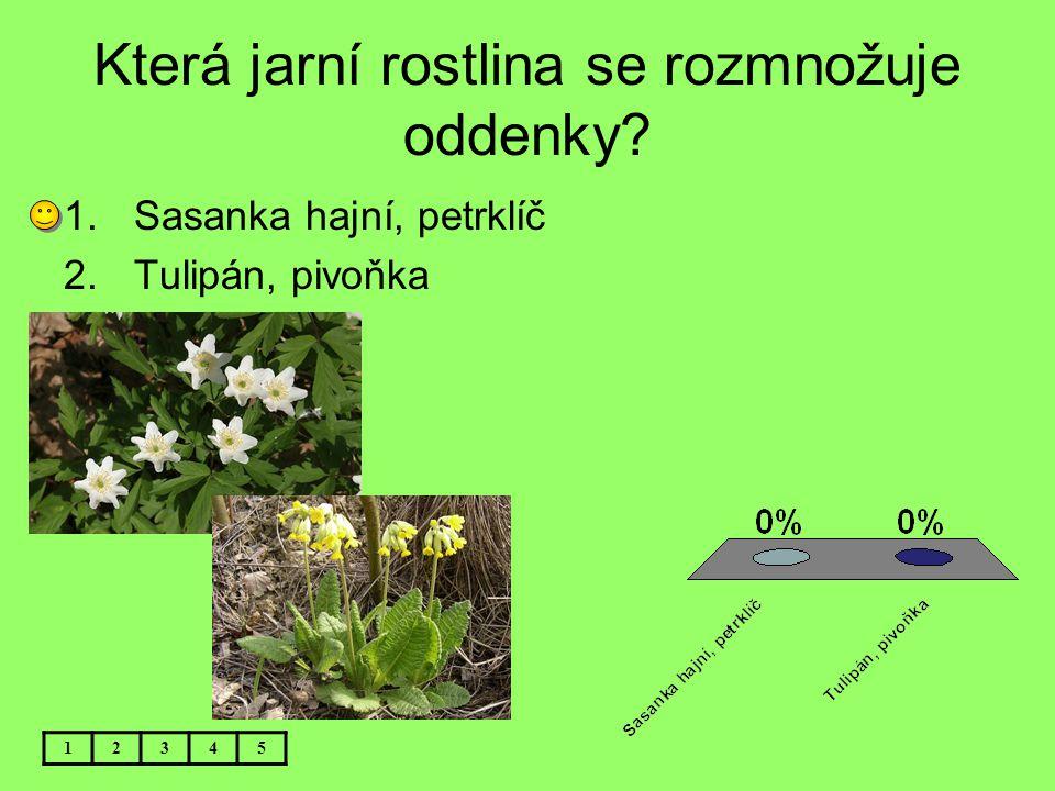 Která jarní rostlina se rozmnožuje oddenky