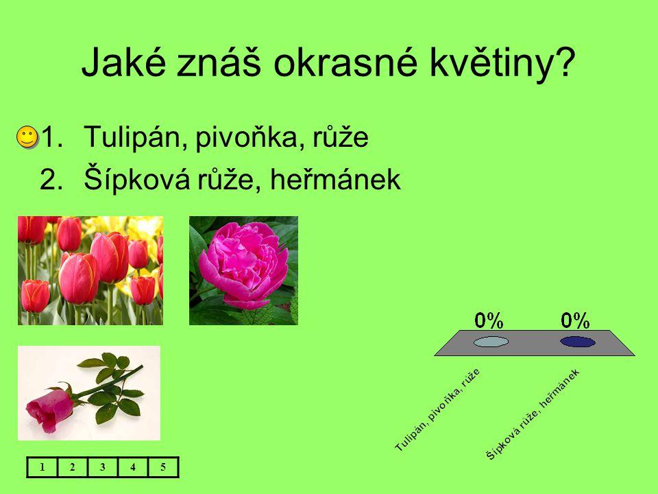 Jaké znáš okrasné květiny