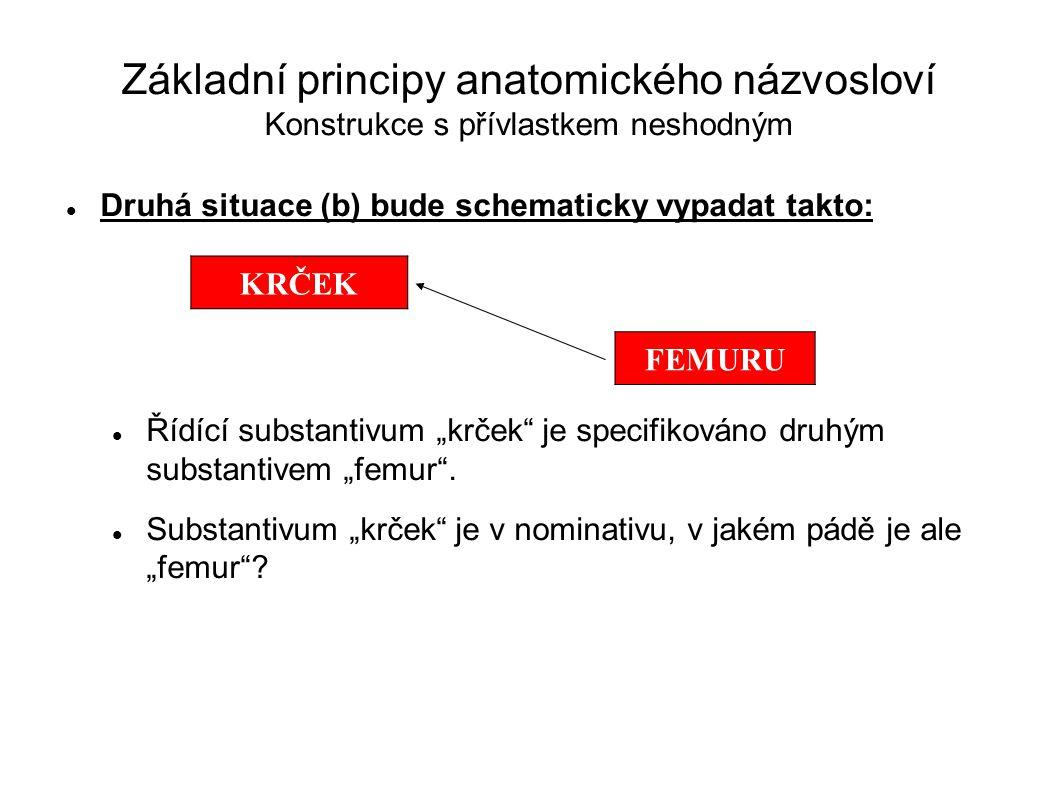 Základní principy anatomického názvosloví Konstrukce s přívlastkem neshodným