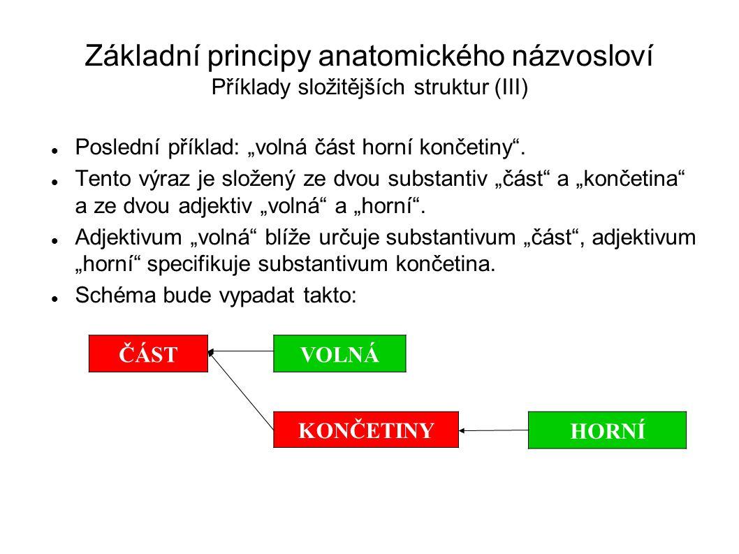 Základní principy anatomického názvosloví Příklady složitějších struktur (III)