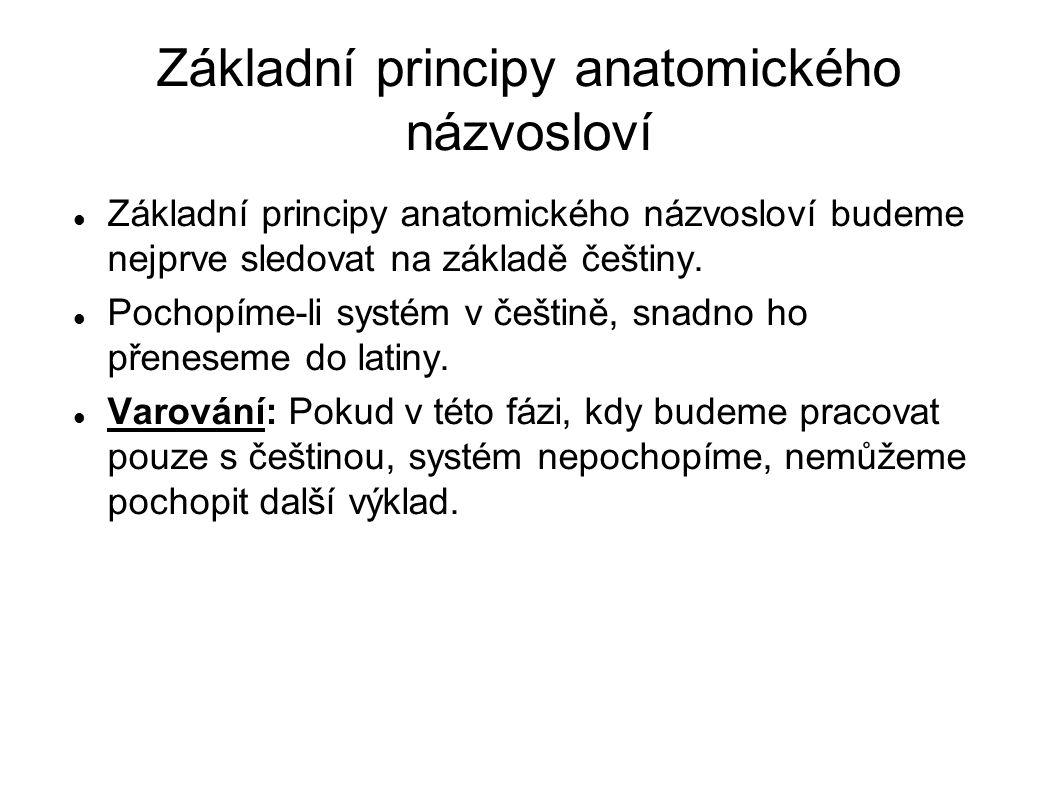 Základní principy anatomického názvosloví