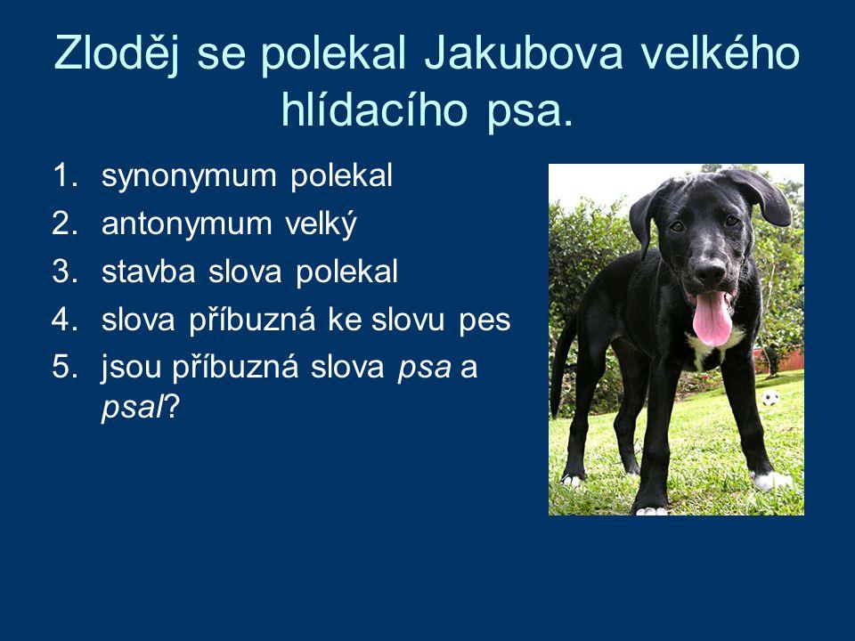 Zloděj se polekal Jakubova velkého hlídacího psa.