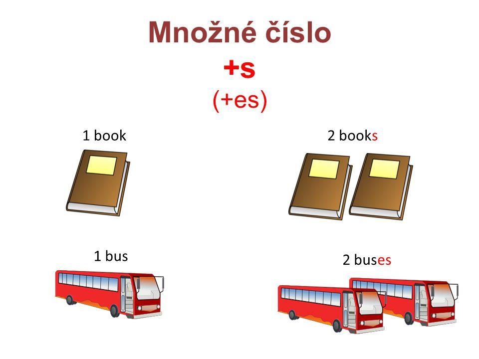 Množné číslo +s (+es) 1 book 2 books 1 bus 2 buses