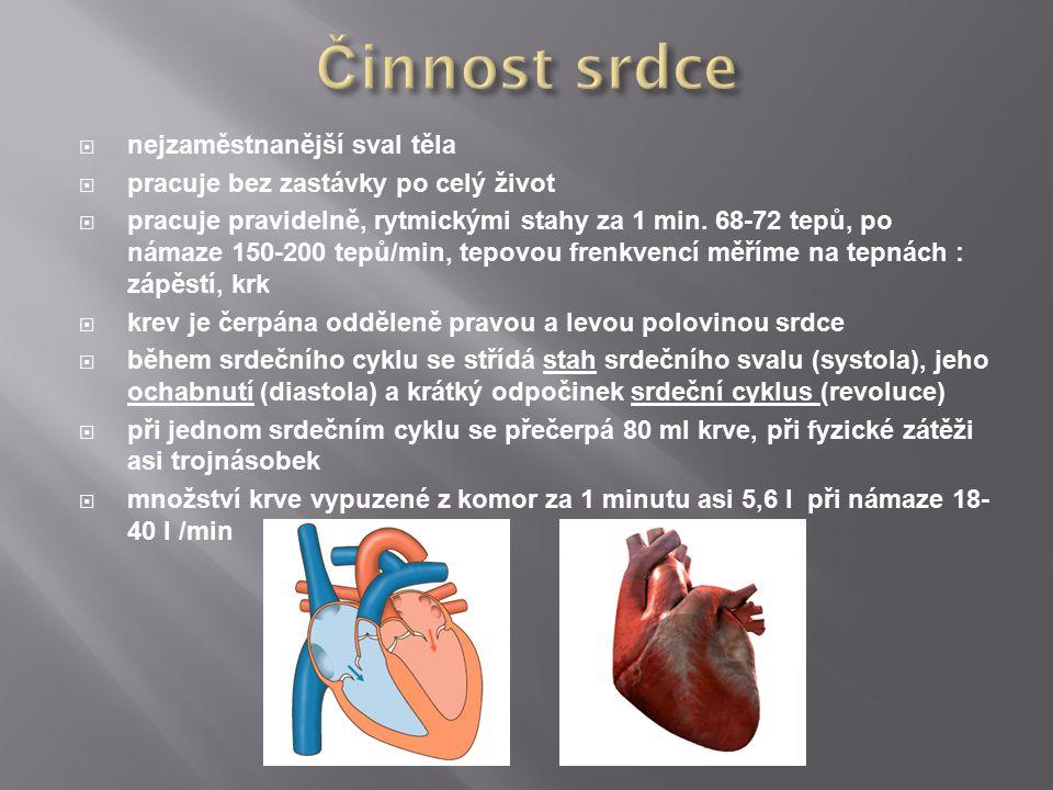 Činnost srdce nejzaměstnanější sval těla