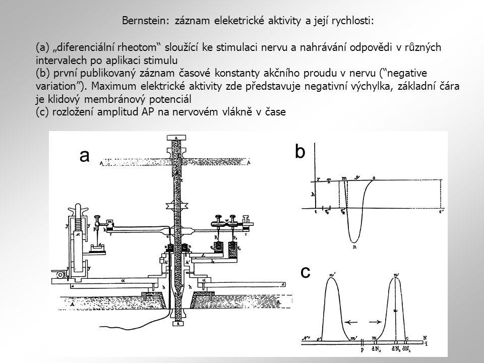 Bernstein: záznam eleketrické aktivity a její rychlosti: