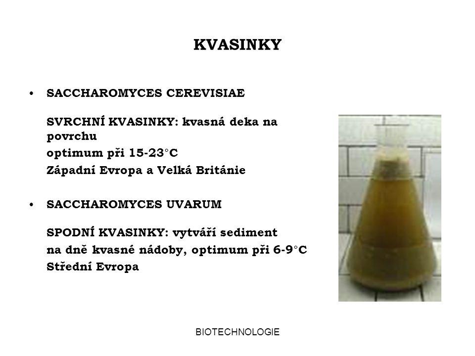 KVASINKY SACCHAROMYCES CEREVISIAE