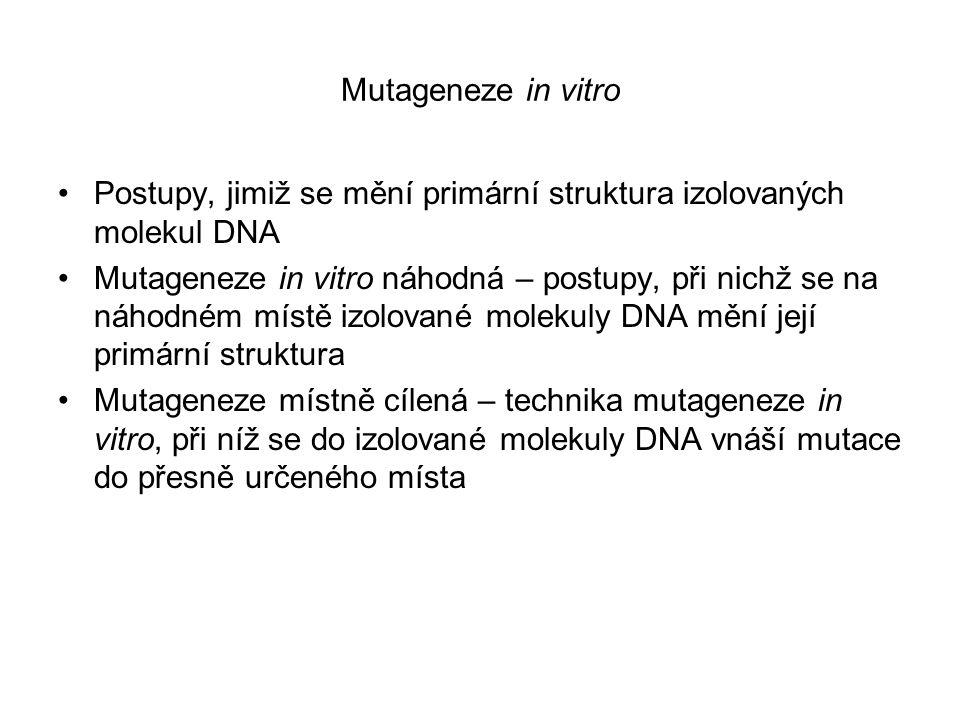 Mutageneze in vitro Postupy, jimiž se mění primární struktura izolovaných molekul DNA.