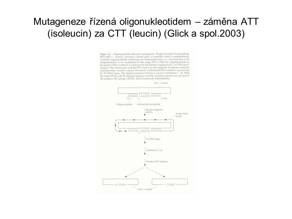 Mutageneze řízená oligonukleotidem – záměna ATT (isoleucin) za CTT (leucin) (Glick a spol.2003)