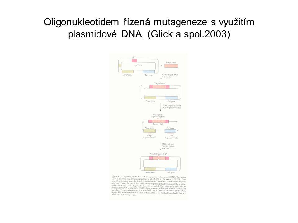 Oligonukleotidem řízená mutageneze s využitím plasmidové DNA (Glick a spol.2003)