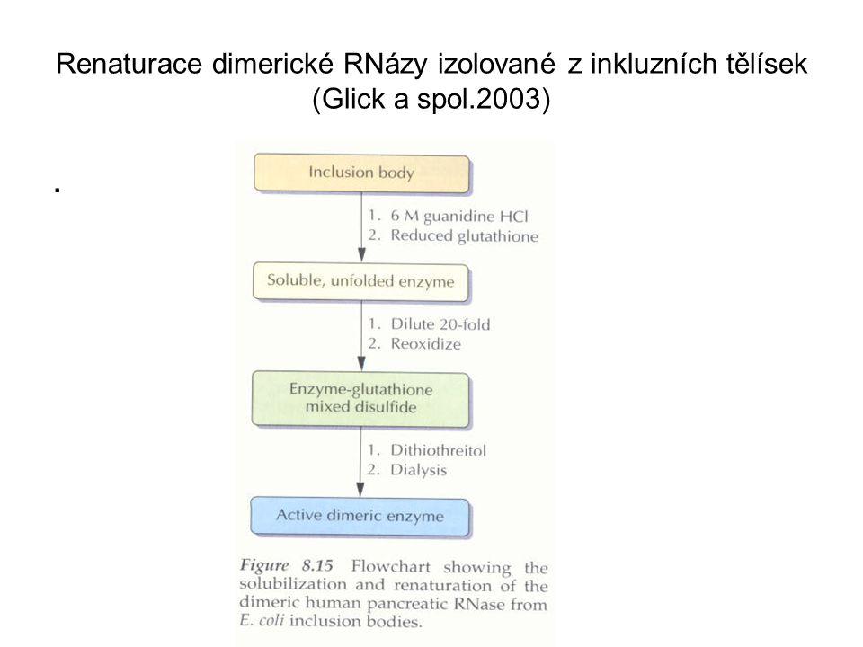 Renaturace dimerické RNázy izolované z inkluzních tělísek (Glick a spol.2003)