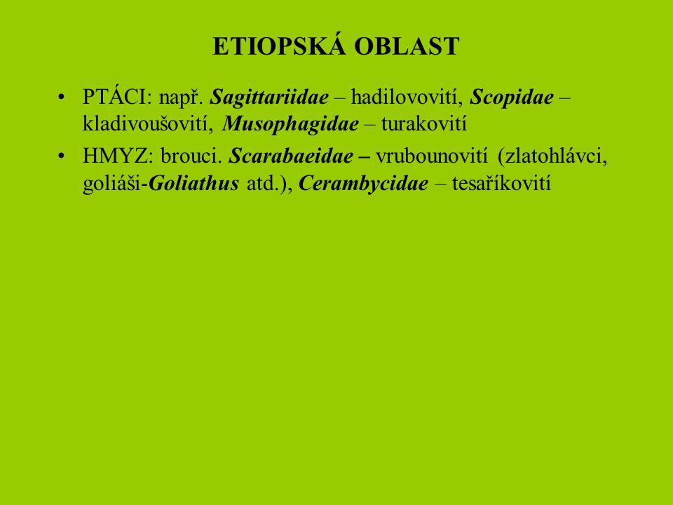 ETIOPSKÁ OBLAST PTÁCI: např. Sagittariidae – hadilovovití, Scopidae – kladivoušovití, Musophagidae – turakovití.