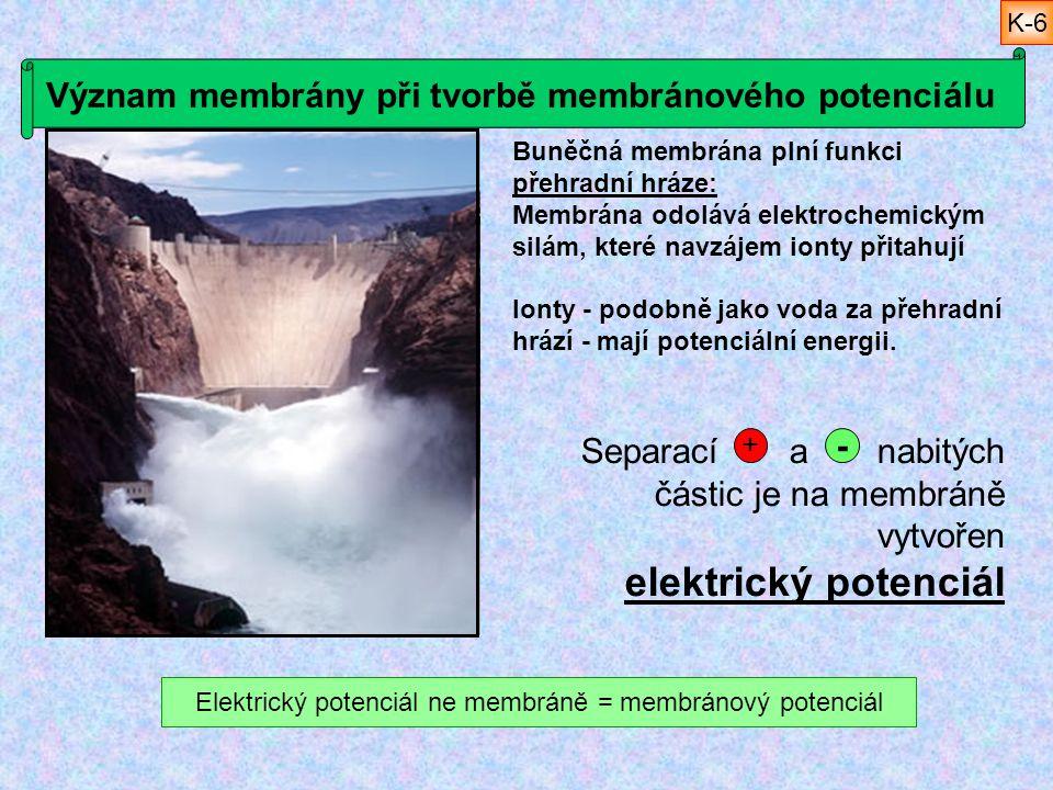 Význam membrány při tvorbě membránového potenciálu