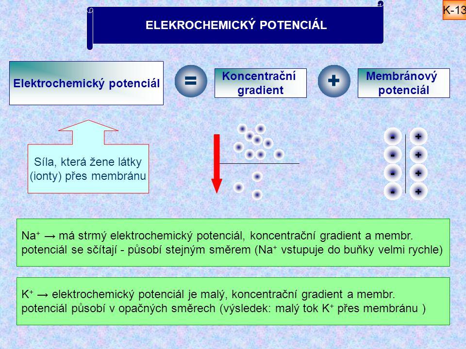 ELEKROCHEMICKÝ POTENCIÁL Elektrochemický potenciál