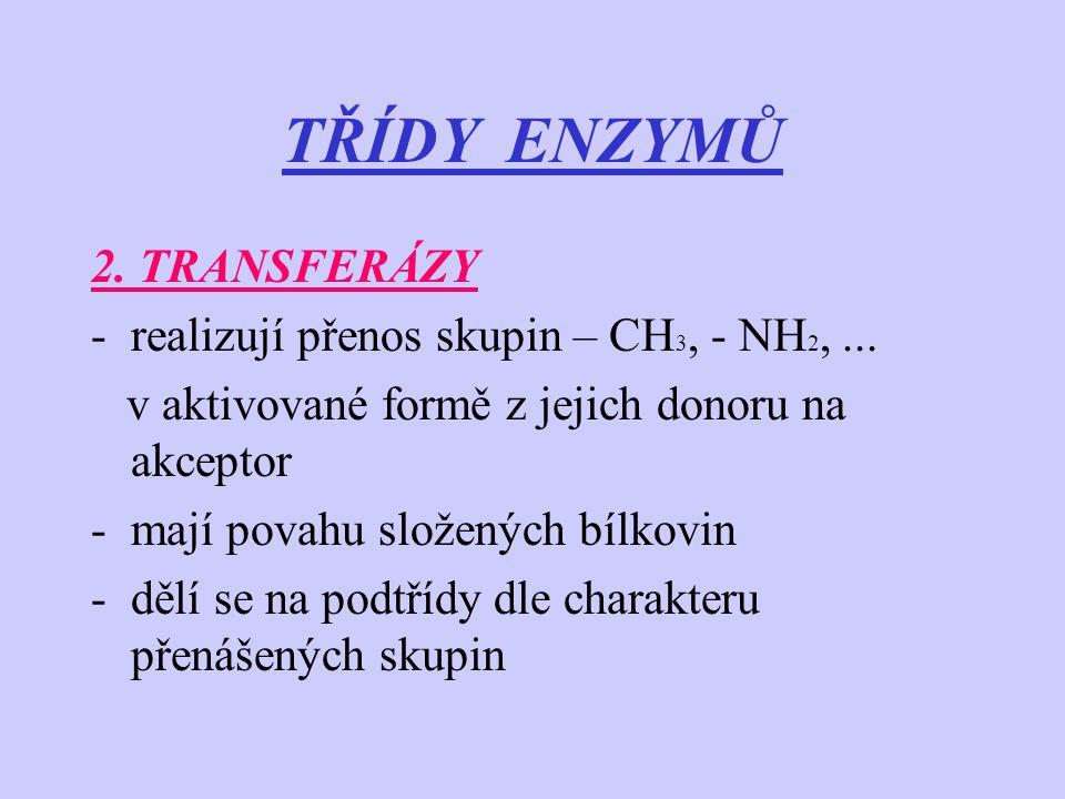 TŘÍDY ENZYMŮ 2. TRANSFERÁZY realizují přenos skupin – CH3, - NH2, ...