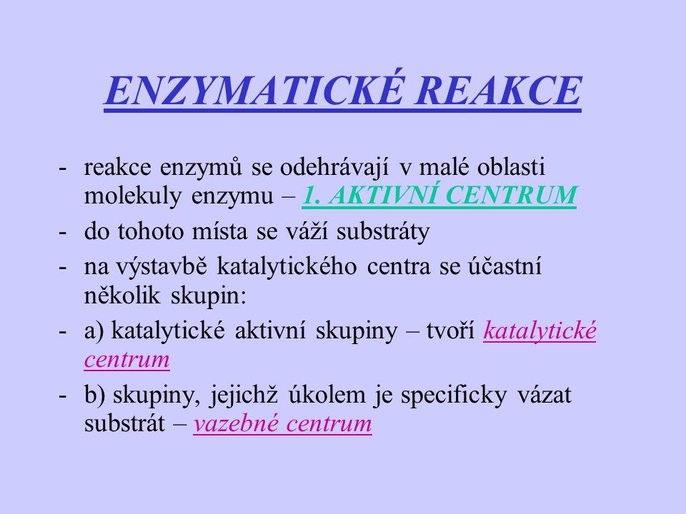 ENZYMATICKÉ REAKCE reakce enzymů se odehrávají v malé oblasti molekuly enzymu – 1. AKTIVNÍ CENTRUM.