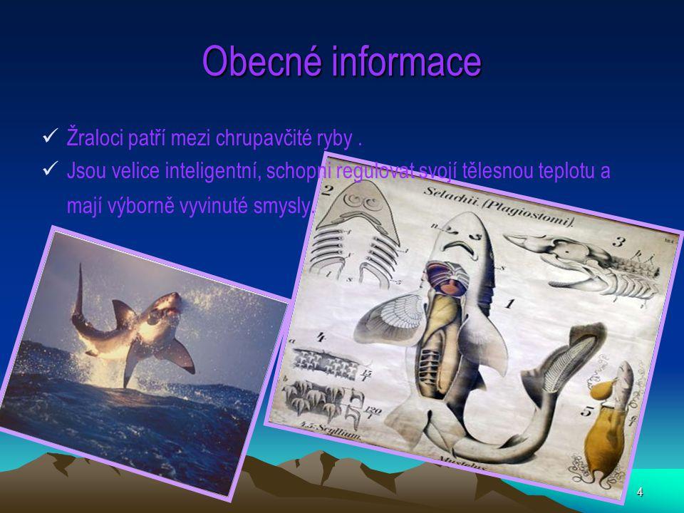 Obecné informace Žraloci patří mezi chrupavčité ryby .