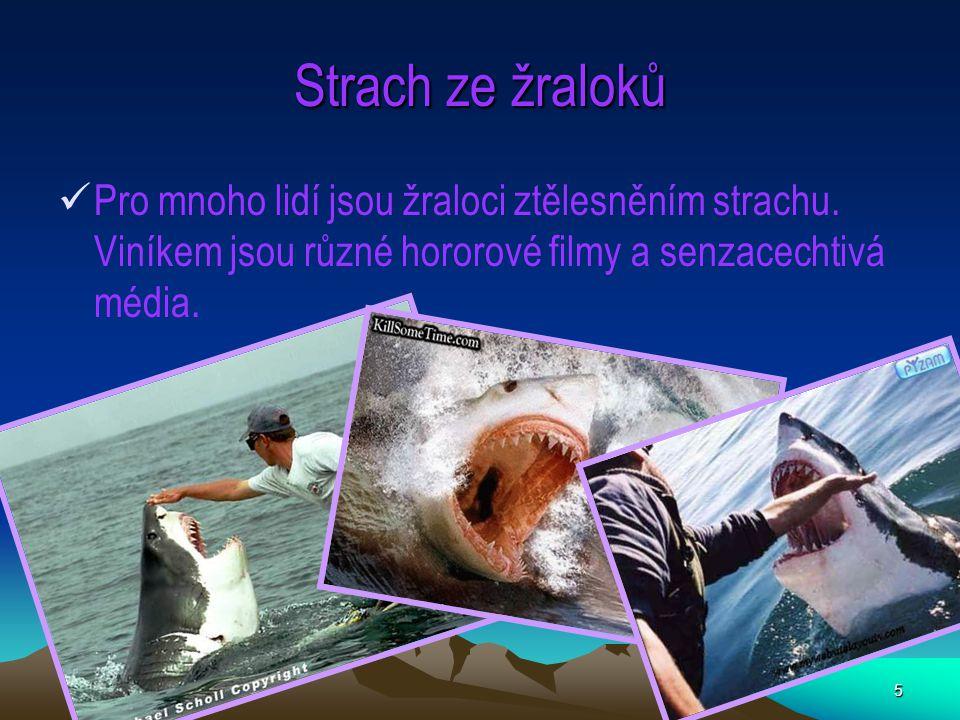 Strach ze žraloků Pro mnoho lidí jsou žraloci ztělesněním strachu.