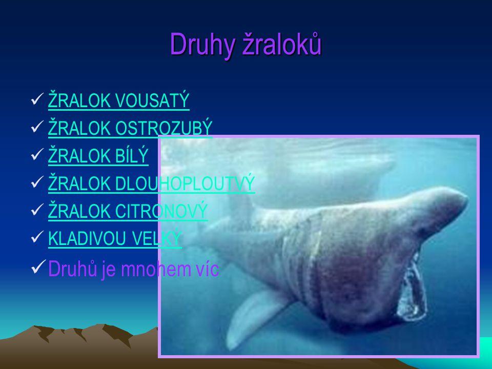 Druhy žraloků Druhů je mnohem víc ŽRALOK VOUSATÝ ŽRALOK OSTROZUBÝ